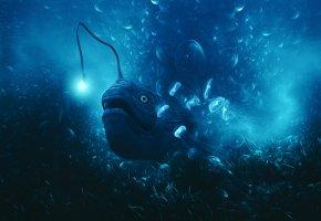Обои море, рыба, медузы, свет