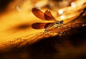 Обои стрекоза, крылья, лапы, глаза, ветка, трава