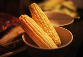 Обои кукуруза, желтая, овощ, зерна, кочан