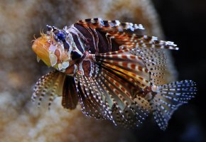 Обои рыба, плавники, глаза, море, океан, экзотика