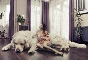 Обои собака, комната, девушка, шатенка, халат, шторы, растения, кружка