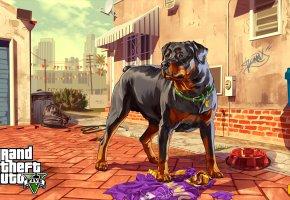 Обои grand theft auto, пес, ротвейлер, миска, улица