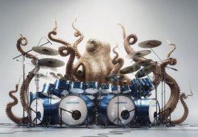 Обои спрут, осьминог, щупальцы, барабаны, палочки, ударник, глаза
