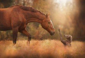 Обои лошадь, собака, друзья, макро, природа