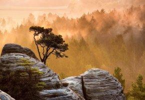 Обои камни, мох, лес, деревья, туман, дымка, пейзажи