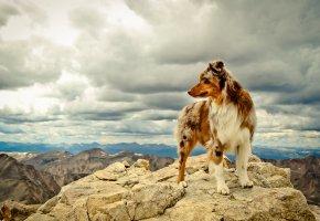 Обои собака, лапы, шерсть, камни, горы
