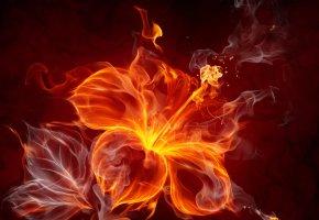 Обои огонь, цветок, абстракция, лепестки, пестик, дым, пламя