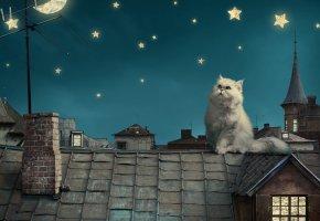 Обои кот, крыша, ночь, звезды, антенна, луна, дома