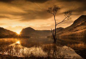 Обои ночь, горы, озеро, закат, дерево, камыши, лучи