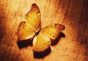 Обои картинка, бабочка, желтая, крылья, усики