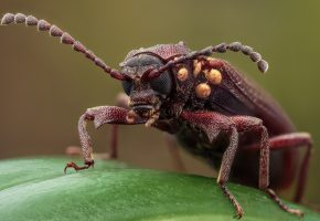 Обои жук, усики, лапки, макро, листик