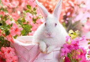 Обои кролик, глазки, уши, нос, корзина, цветы