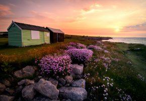 Обои dorset, flowers, portland, england, остров, портленд, закат, цветы