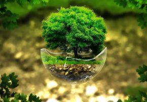 Обои trees, render, 3d, дерево, сфера, стекло