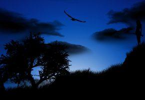 Обои природа, птица, ночь, охотник, дерево, облака