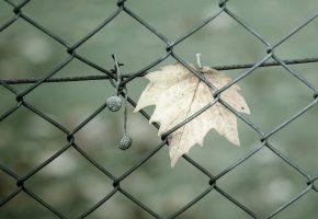 Обои забор, сетка, лист, сухой, травинка