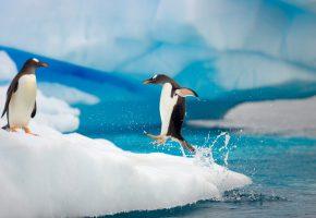 Обои океан, лёд, пара, пингвины, прыжок, капли, брызги, лапы