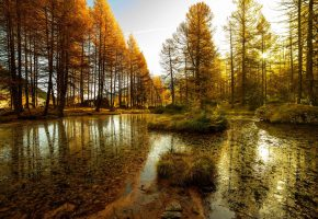 Обои лес, деревья, водоем, озеро, вода, тина, осень