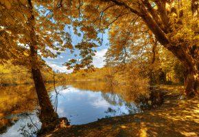 Обои осень, лес, деревья, листья, желтые, берег, речка