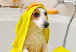 Обои собака, мокрая, ванна, полотенце, морда