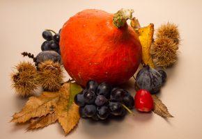 Обои натюрморт, осень, плоды, листья, тыква, ягоды