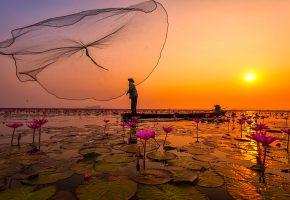 Обои Тайланд, озеро, рыбак, сеть, цветы, розовые лотосы