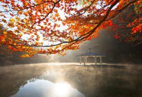 Обои Деревья, листва, беседка, пруд, свет
