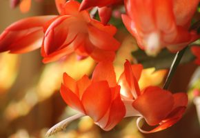 Обои макро, macro, красота, природа, цветы, ярко, лето