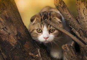 Обои котенок, ушки, дерево, ветки, глазки, kitty
