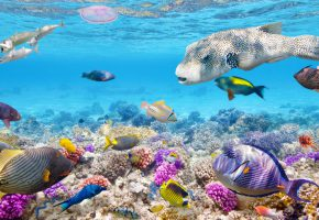 ���� reef, tropical, fishes, ocean, �����, �����, ���������� ���