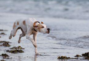Обои собака, взгляд, бег, друг, брызги, лапы