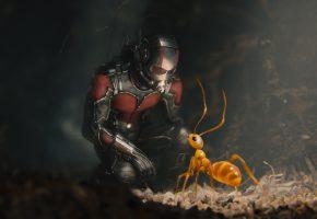 Обои Ant-man, Человек-муравей, Марвел, комикс, шлем, костюм, супергерой, муравей