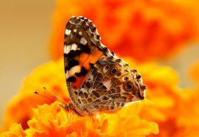 Обои бабочка, мотылек, краски, цветы, крылья, узор