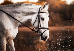 Обои конь, природа, лошадь, белая, брызги