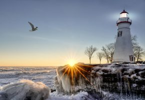 Обои море, побережье, зима, лед, маяк, деревья, чайка, солнце, лучи