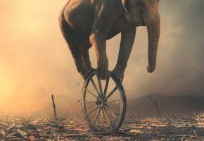 Обои слон, колесо, хобот, арт