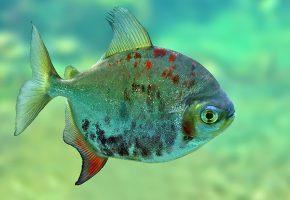 Обои вода, рыбка, плавники, пятна, глаза