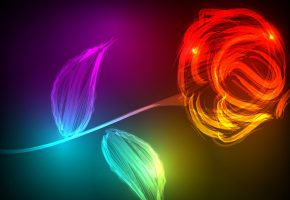 Обои роза, свет, сияние, цвета, фон