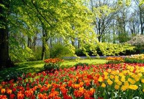 Обои Кекенхоф, сады, тюльпаны, Голландия