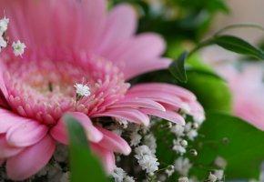 Обои герберы, цветы, букет