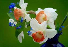 Обои цветы, нарцисы, незабудки, букет