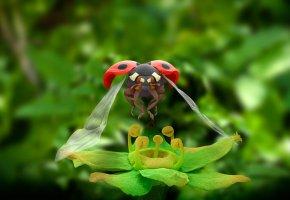 Обои насекомое, цветок, божья коровка, крылья