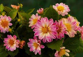 Обои цветы, лепестки, яркие