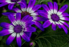 Обои цветы, лепестки, макро