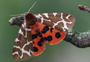Обои бабочка, ветка, крылья, узор, насекомое