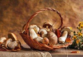 Обои корзина, грибы, белый, природа