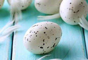 Обои яйца, пятна, blue, feather, eggs, перья