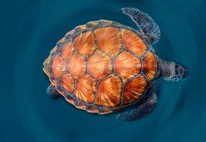 Обои зеленая морская черепаха, море, краски, панцирь