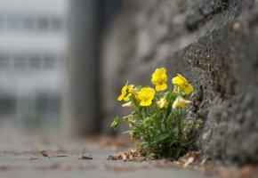 Обои цветы, желтые, улица, город