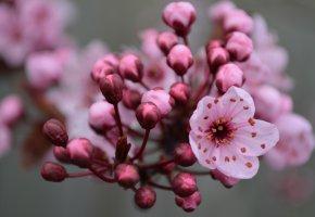 Обои Весна, цветение, spring, flowering, бутоны